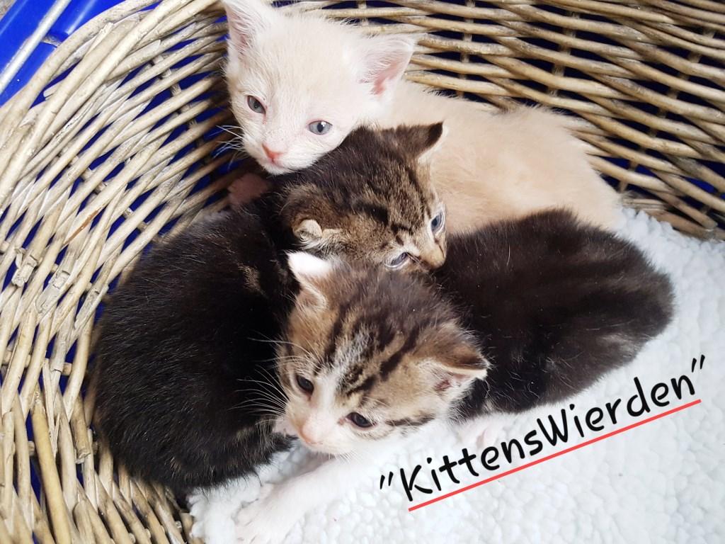 Foto: Kittens Wierden © Persgroep