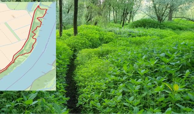 Soms is het pad onvindbaar maar als je de Nieuwe Merwede volgt komt het goed.(foto: Marco van Schaardenburgh; inzet: Open Street Map)