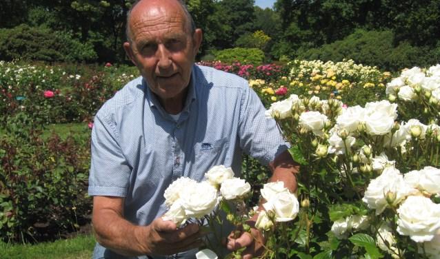 Keurmeester Rien Vurens bij een fraai exemplaar van één van de grootste kwekers van rozen, Kordes uit Duitsland.