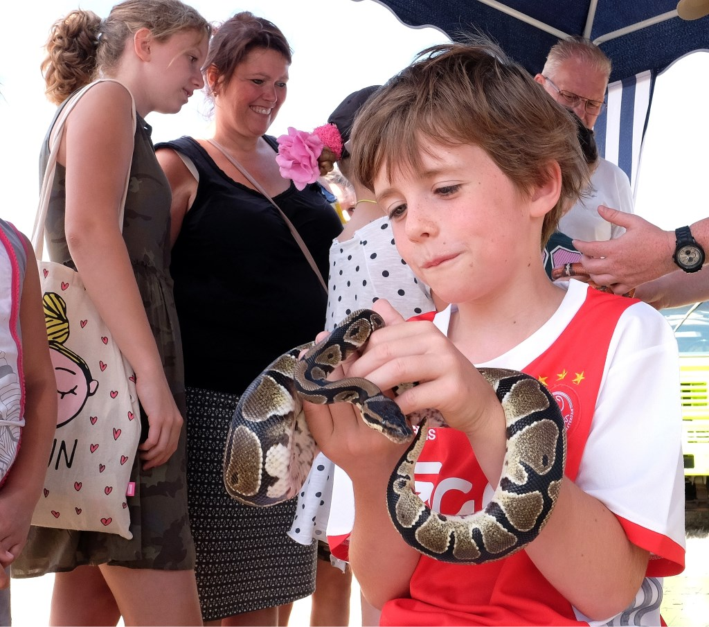 Slangen voelen, Het reptiel was echter niet van Ouwehands Dierenpark afkomstig. (Archieffoto: Max Timons)