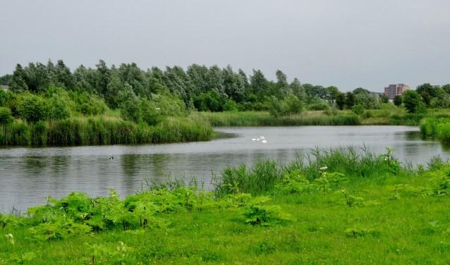 De Koedoodzone vormt een natuurlijke klimaatbuffer (Foto: Natuurvereniging Eiland IJsselmonde)