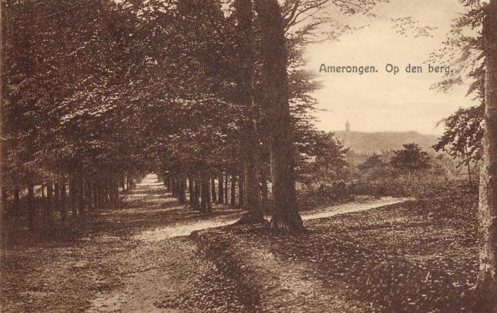 Oude ansichtkaart Amerongse Bos