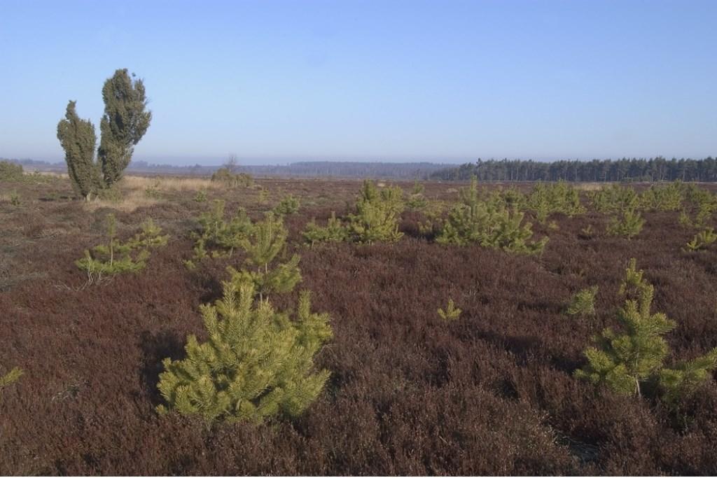 Het veranderende landschap wordt besproken tijdens een wandeling. Foto: Staatsbosbeheer.