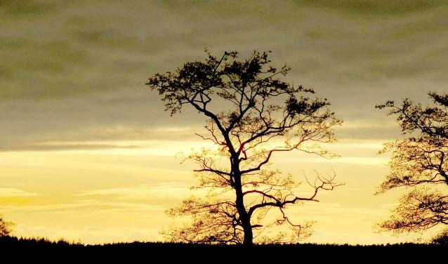 Gouden morgenstond op de Sallandse Heuvelrug. Foto: Staatsbosbeheer. Foto: Staatsbosbeheer © Persgroep