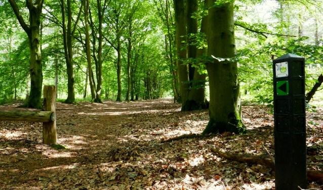 Door het bos is een mooie, goed gemarkeerde wandeling uitgezet. FOTO: Rien de Schipper.