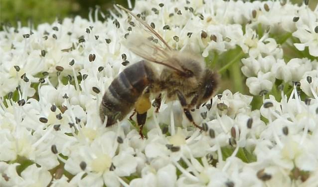 Bijen zijn kleine beestjes, maar ze zijn onmisbaar voor het leven op aarde in z'n huidige vorm.
