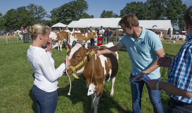 De Agrifair begint op vrijdag met het onderdeel fokveedag. Foto: Lenneke Lingmont / Tubantia.