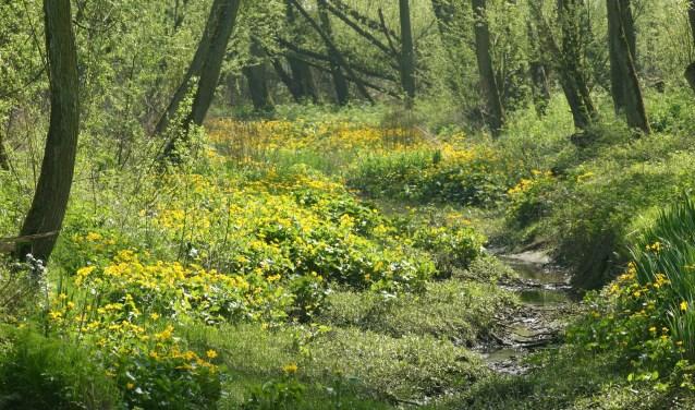 In Klein Profijt heeft de natuur vrij spel (Foto|: ARK Natuurontwikkeling)