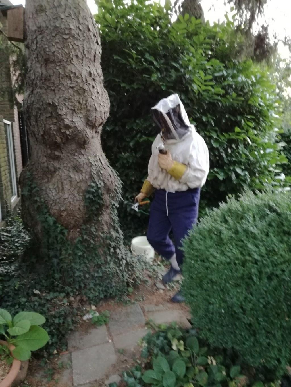 Wespen in struik Foto: Rob Moret © Persgroep