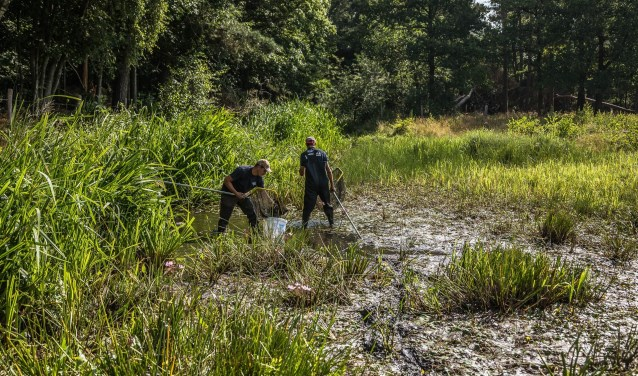 Waterschap Aa en Maas heeft afgelopen vrijdag honderden vissen overgezet van de Snelle Loop tussen De Mortel en Aarle-Rixtel naar de Aa bij Beek en Donk.