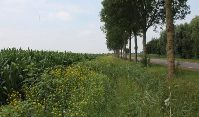 Bloemrijke gras- en akkerranden vormen een prachtig beeld en horen bij het Betuws landschap. Er zijn nu een aantal prachtige fietsroutes langs deze plekken.
