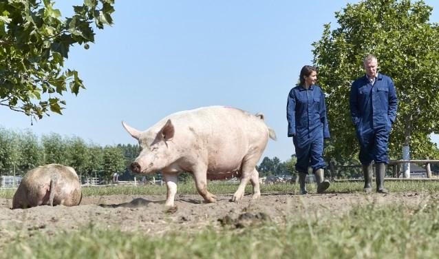 Gedeputeerde Anne-Marie Spierings en Joost van Alphen in het buitenverblijf van de zeugen Foto: Wim Hollemans