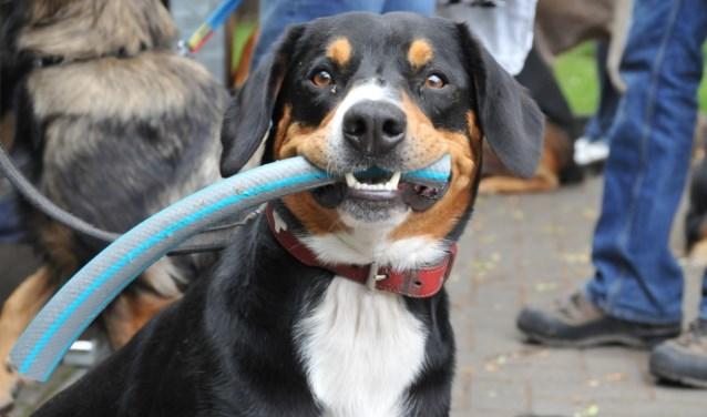 Hondenliefhebbers zijn zondag 22 juli welkom bij de Hundemesse in Dorf Münsterland.