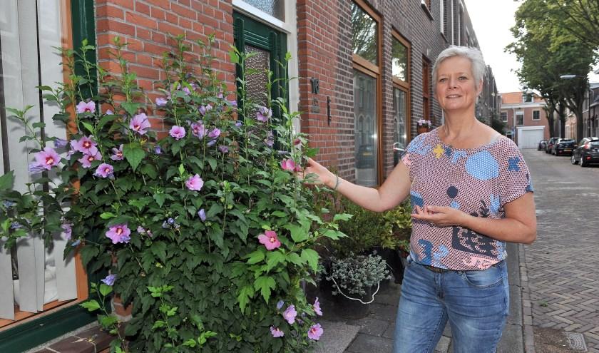 """Wendy Bakker: """"Met een of twee tegels eruit heb je al kleur langs je gevel, zoals met deze Hibiscus in de Leliestraat, waar ook bijen op vliegen.""""  Foto: Erwin Dijkgraaf Fotografie"""