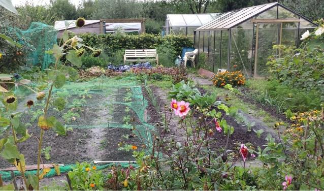 Volkstuinvereniging De Kloostertuin in Zaltbommel viert het 35-jarig bestaan met een 'open tuin'. Iedereen is welkom.