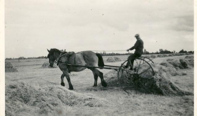 Het boerenbedrijf kon vroeger niet zonder het paard. (foto uit het boek)