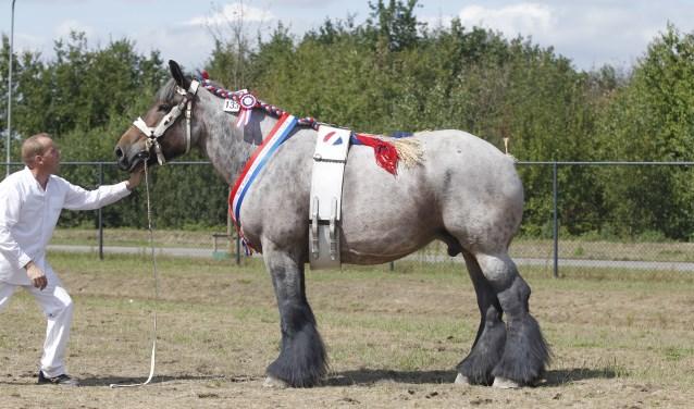 Nationaal kampioen Dara van Waardzicht