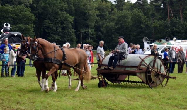 Het oogsten gebeurt met de hand of met historische werktuigen die bijna allemaal door paarden worden getrokken. (Foto: Hetty Heijne)
