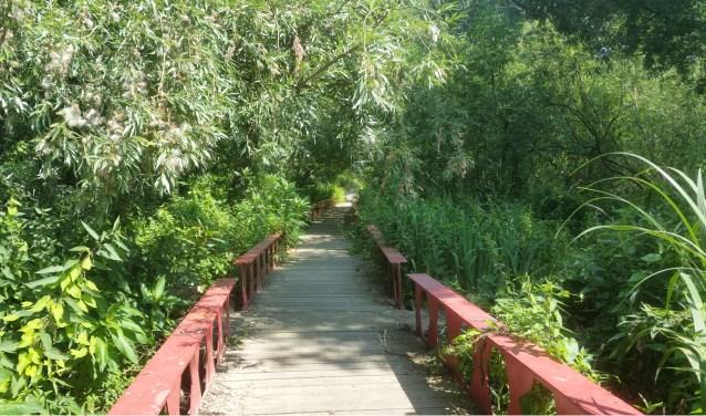 Het Ruigeplaatbos is één van de 13 natuurgebieden in de regio. (Foto: Ineke van Dort)