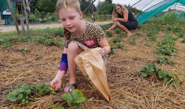 zelf aardbeien oogsten bij Stadslandbouw Mooieweg