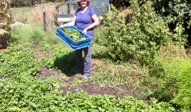 Naar aanleiding van onze oproep voor een recept met Nieuw Zeelandse spinazie ontving ik een recept van Anneke van Pelt met een leuke anekdote!