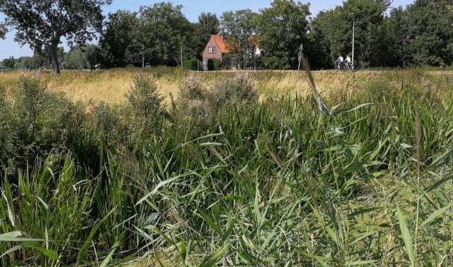 Blijft het gebied in de Zuidbuurt haar groene aanzien houden na de aanleg van de Blankenburgtunnel? (Foto: Peter Spek)
