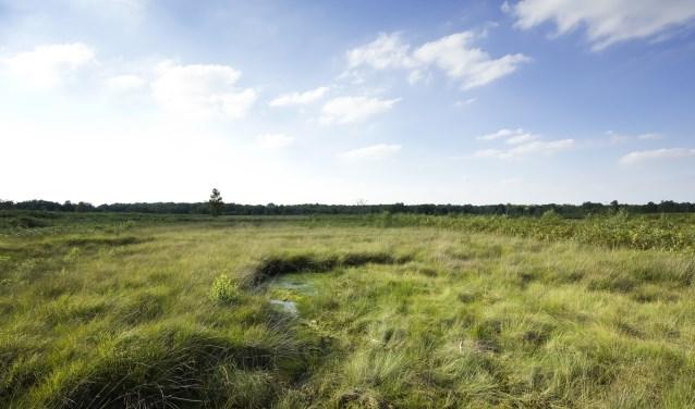 Het Aamsveen is een bijzonder stuk natuur. Foto: Ruud Ploeg Fotografie