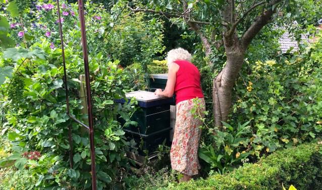 """Annemargreet controleert bijen: """"Deze tak moet eigenlijk weg"""" En ze gaat meteen aan het werk. Foto: Sterre ten Houte de Lange"""