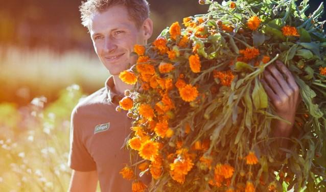 """Tuinman Joost Rooseboom de Vries: """"Het is echt Code Oranje bij ons in de A.Vogel Tuinen!"""" (Foto Stef Nagel)"""