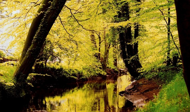 Uren kan Eddy dwalen in het bos met de woudreuzen dat in het grensgebied net onder de Dreiländersee ligt.