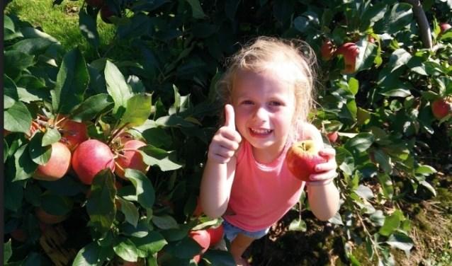 De maand september is de oogstmaand voor appels en peren. (Foto: Privé)