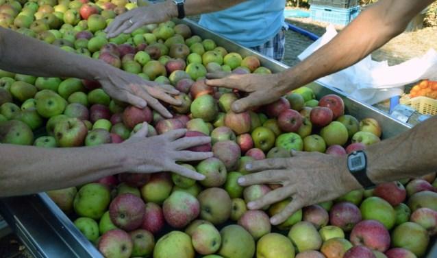 De zonnige zomer zorgt voor veel fris fruit. Foto: Natuurtuin 't Loo.
