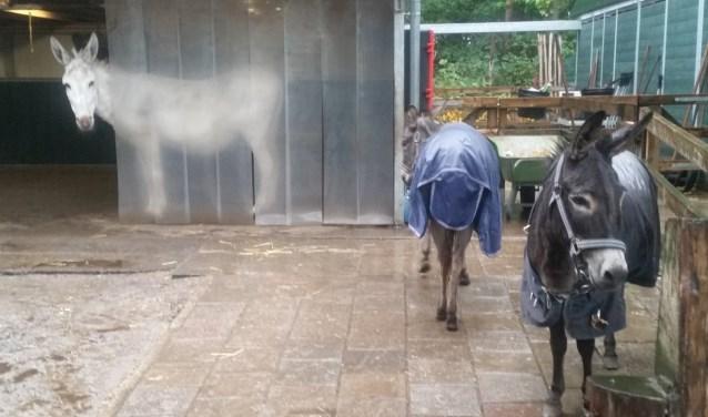 Anna is gauw droog gaan staan. Floor showt de achterkant van haar regenjas.