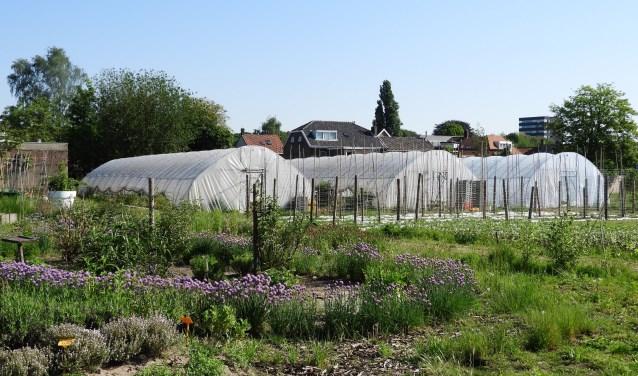 StadsTuinderij Piushaven is een collectieve tuin aan de Havendijk waar ruim 50 vrijwilligers en een aantal dagbesteders onder professionele begeleiding groenten, bloemen en kruiden telen.