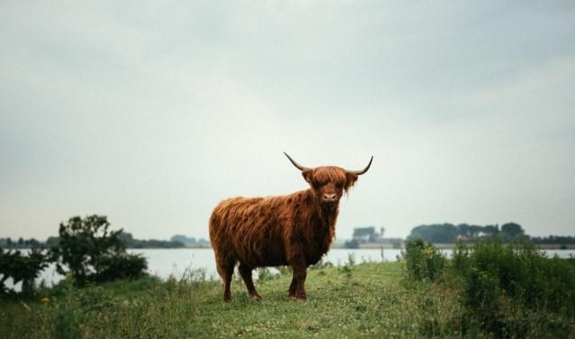 Het Laatste Eiland is een nieuw festival. (Foto: Ruben Hamelink)