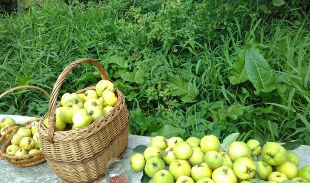 Recente oogst uit het voedselbos