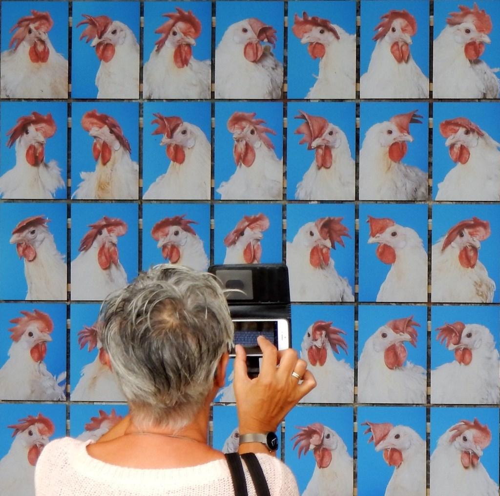 Zie nr. 11 Foto: Paul Hermans © Persgroep