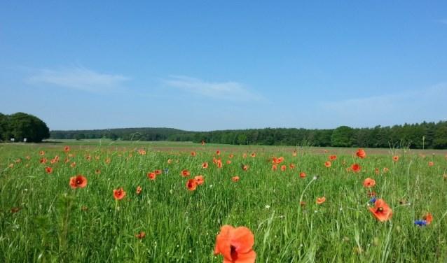 Bloeiende akkerranden zorgen vergroten de biodiversiteit