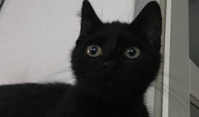 Dier Van De Week Quick Kitten De Toren