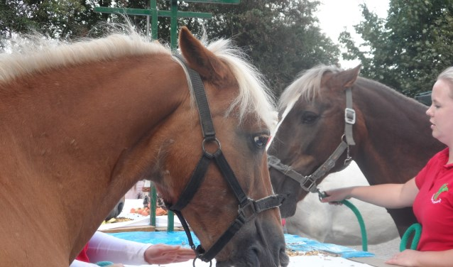 Het buffet voor paarden en pony's is altijd een spectaculaire happening.