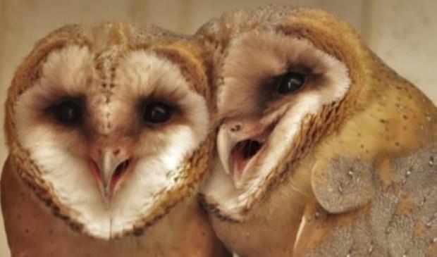 Hille de Bruin is gespecialiseerd in het fotograferen van vogels in de natuur.
