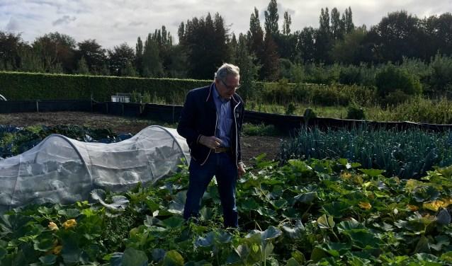 Vrijwilliger Ad van Opstal aan het werk in de voedseltuin van landpark Assisië in Biezenmortel.