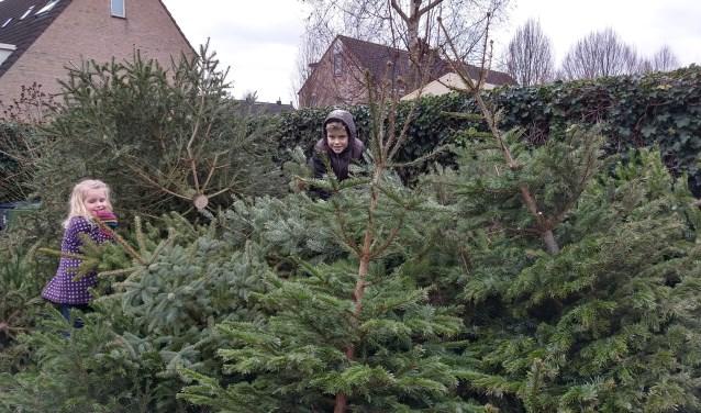 Henk en Jet met hun stapel kerstbomen