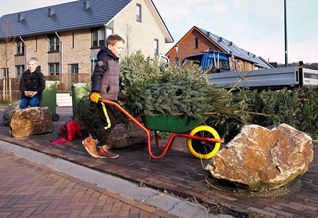 Rikkert en Mike (met kruiwagen) sleepten op de nieuwbouw van de Vogelenzang heel wat kerstbomen bij elkaar heel wat bomen op.  © Persgroep