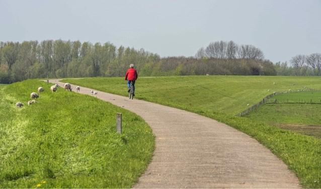 In februari en maart inspecteert Waterschap Rivierenland de dijken langs de grote rivieren. (Foto: Privé)
