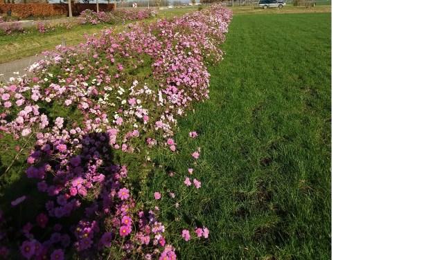 Wil jij dit jaar ook een stukje van je tuin inzaaien? Neem dan contact op met Koos Tromp: 0418- 677 134.