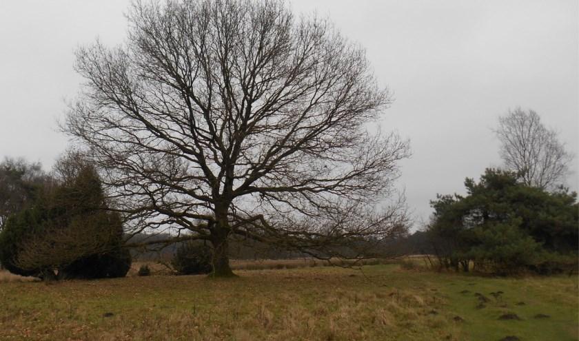 herken bomen ook in de winter!