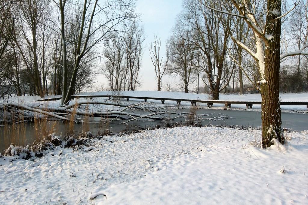 Deze zijn van 2013. Hopelijk mogen die ook meedoen. Ze zijn uit Hoogvliet, de Visserijgriend. Foto: Minko Lamberts Foto: Minko Lamberts © Persgroep