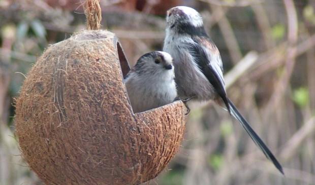 Tuinvogels tellen. (foto: pr)