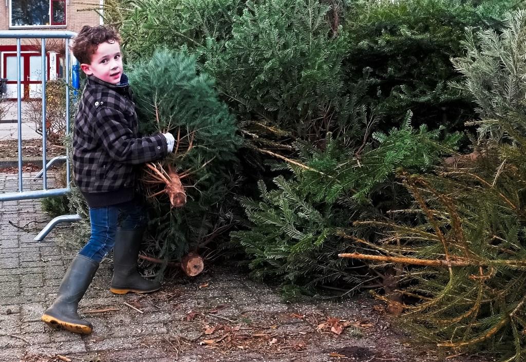 Niek uit Rhenen laat de kerstboomstapel nog weer groeien.  © Persgroep